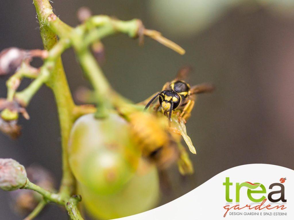 Eliminare dal frutteto vespe e calabroni