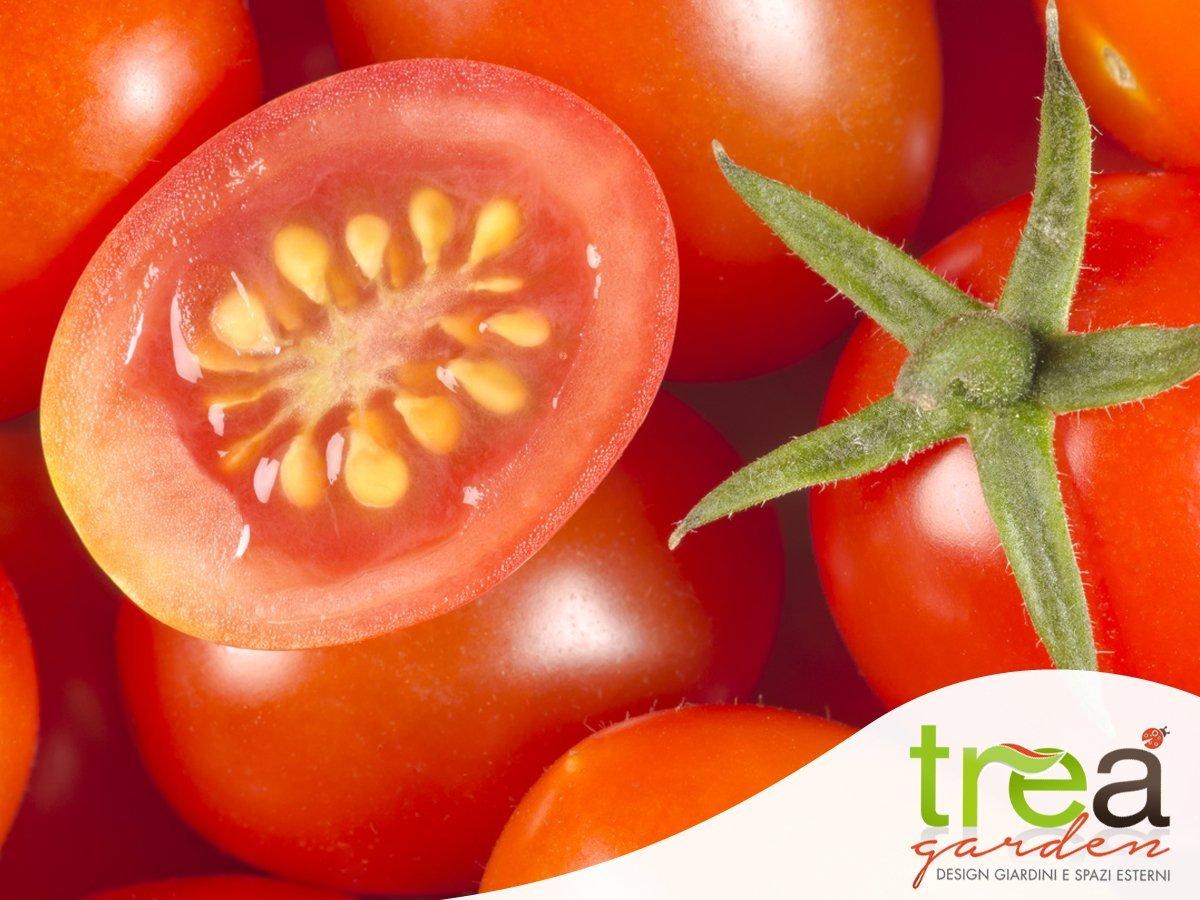 semi di pomodoro