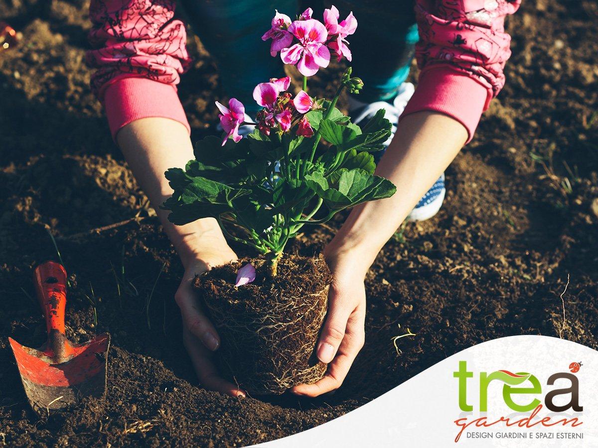 gerani aprile coltivare piantare concimare