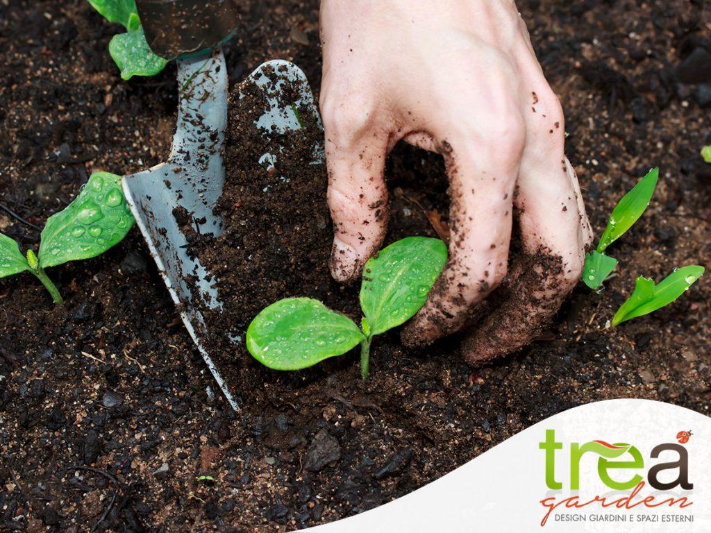 PIANTARER VERDURE ortaggi trea agricoltura giardinaggio pet gardening shop