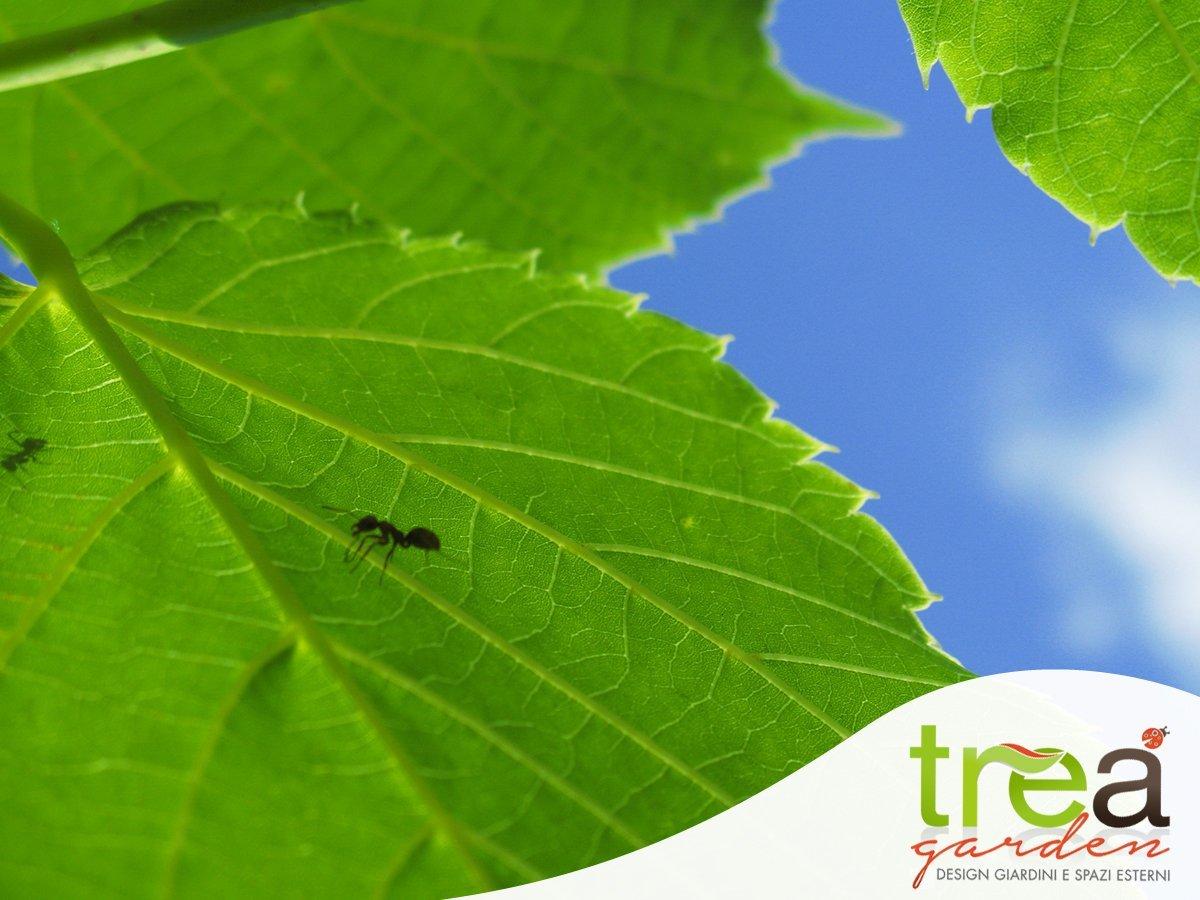insetti parassiti cura trattamento