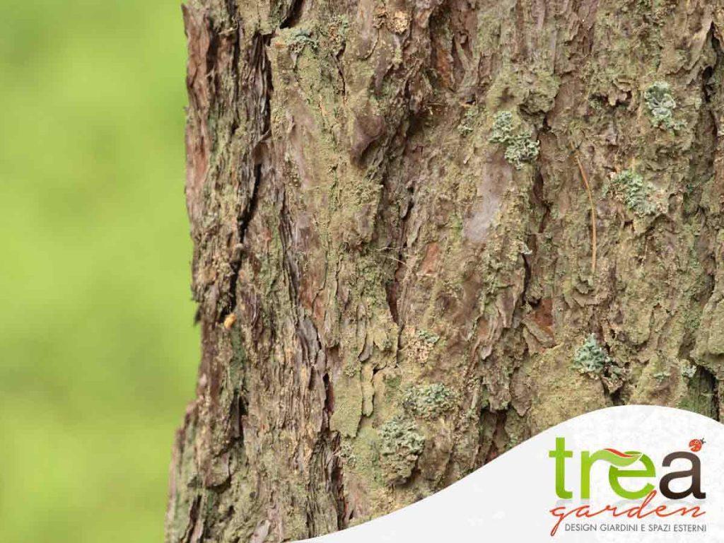 manutenzione tronchi e rami trea agricoltura