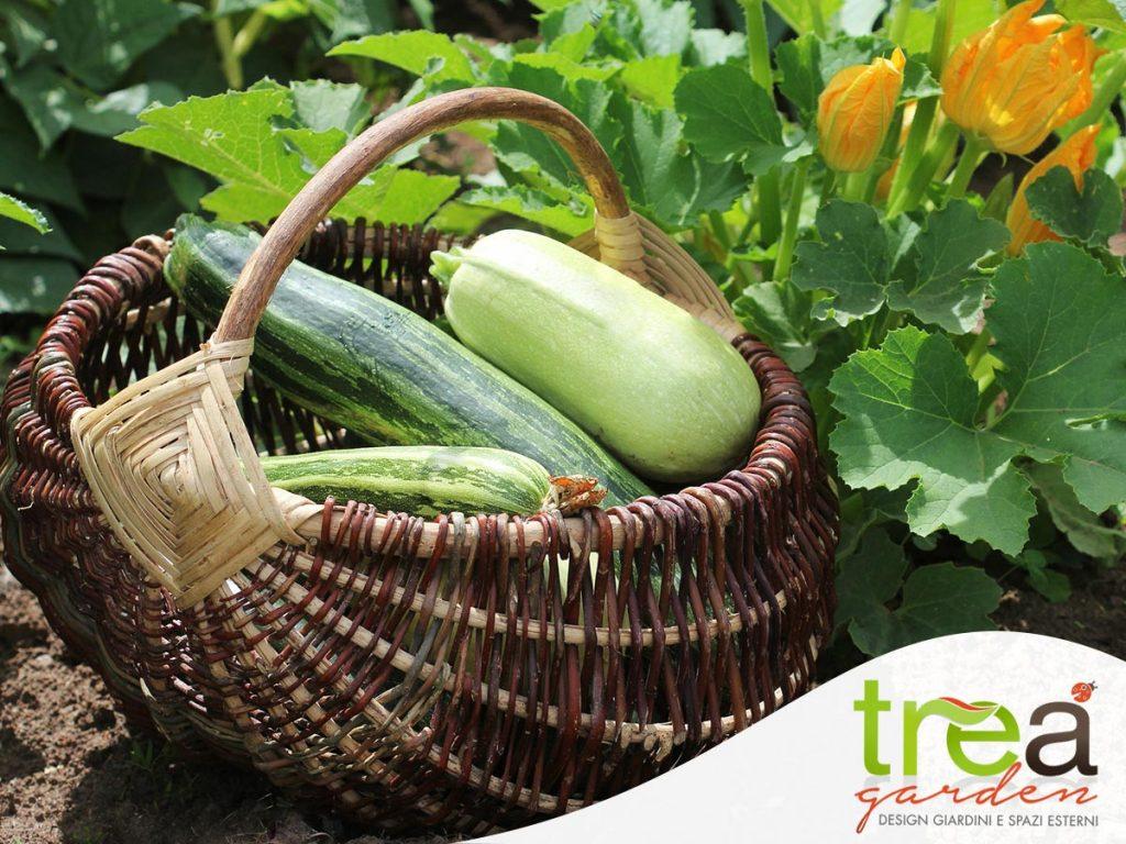 zucchine orto giardinaggio maggio primavera consigli trucchi segreti