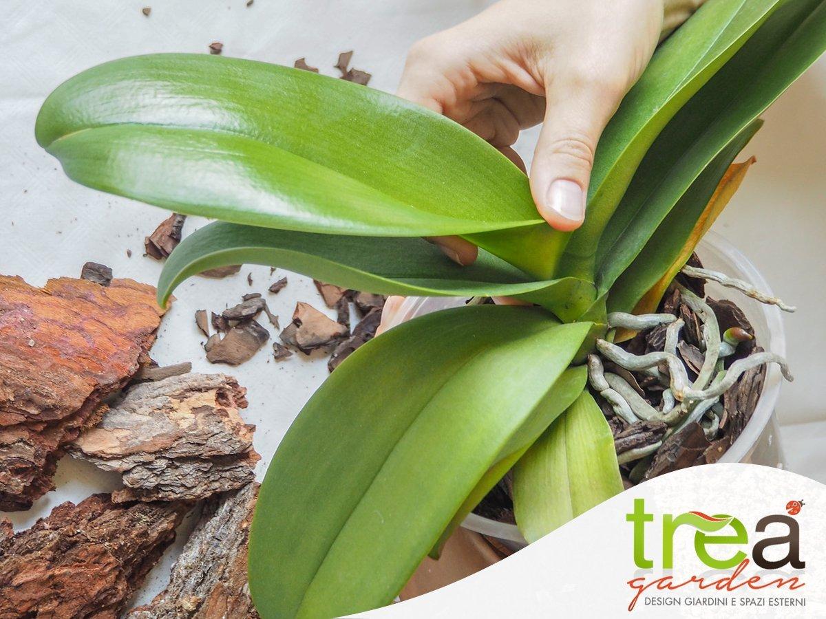 curare le orchidee ad aprile