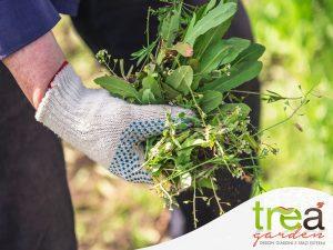 diserbo levare erbacce e d erbe infestanti dal giardino, dall'orto e dal viale a maggio primavera