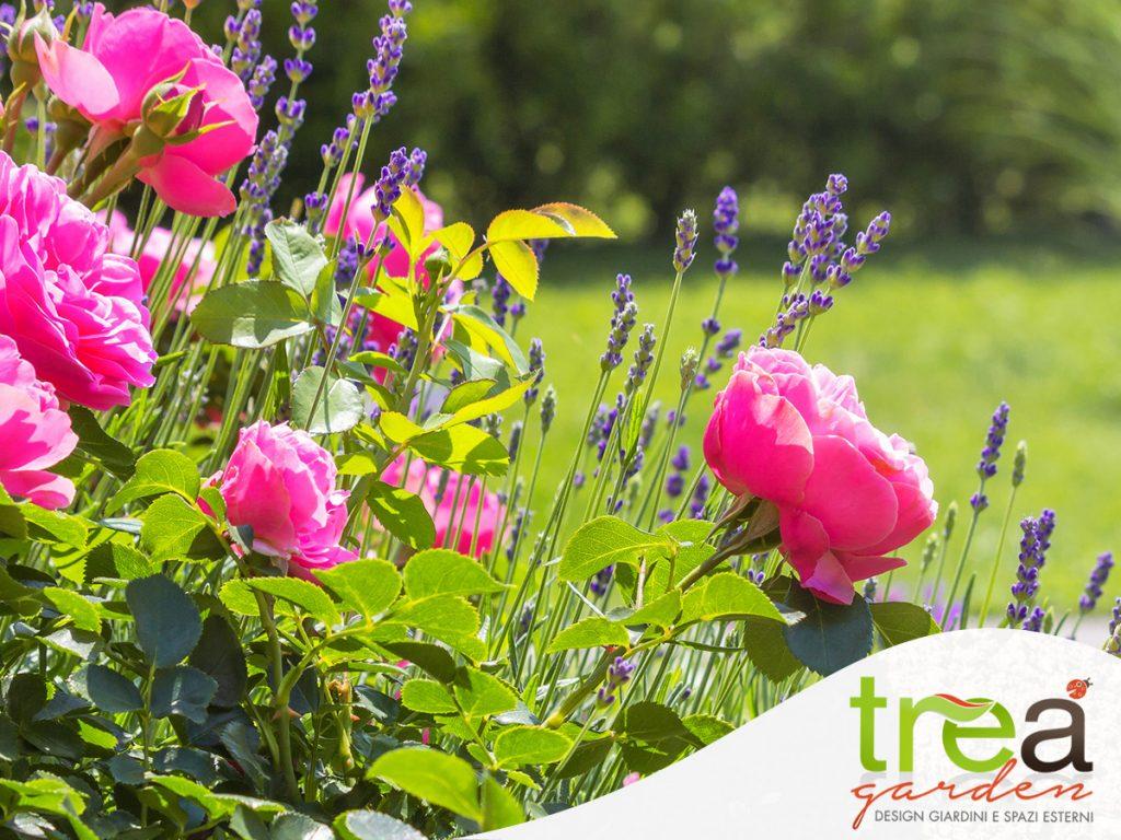 associazione di giardinaggio le rose di rose con altri fiori a maggio nel giardino