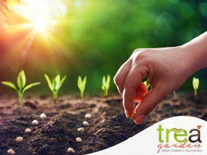 mano che pianta seme nell'orto tre-a garden e pet shop voghera italia