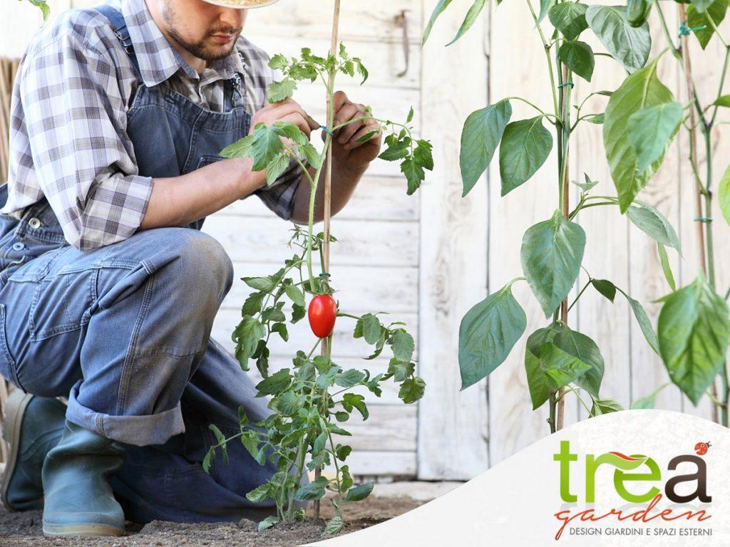 ,anutenzione orto pomodori tiranti tre a garden e pet shop voghera