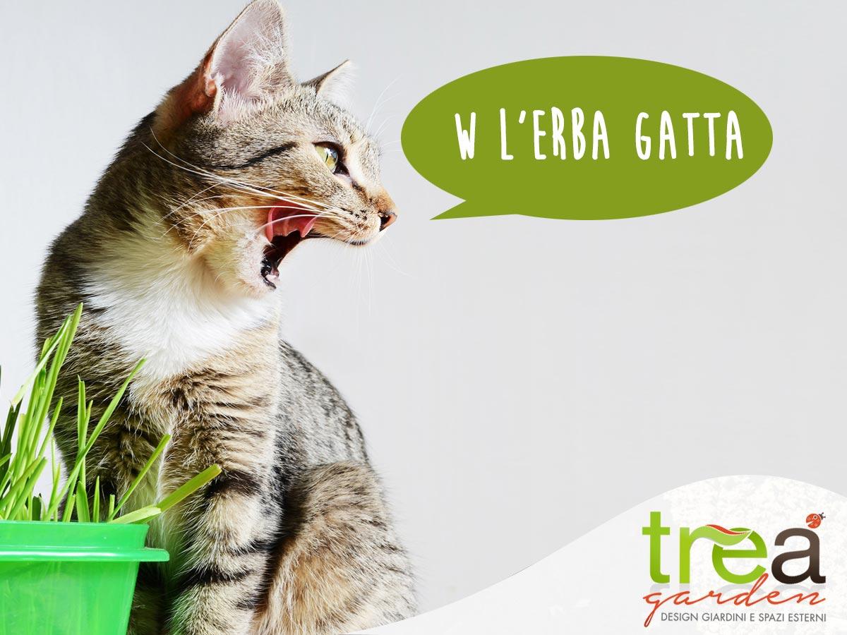 gatto con davanti erba gatta cosa è e a cosa serve curiosità tre a garden e pet store voghera alessandria