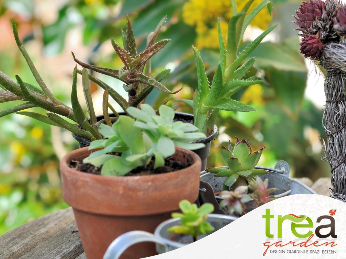 piante-grasse- per tre a come curarle