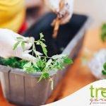 trapianto piante in vaso o terreno tre a garden e pet store