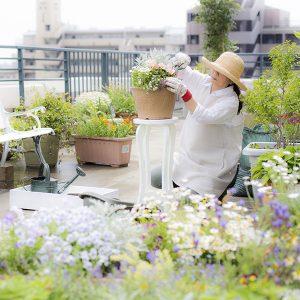Piante per terrazzo e balcone
